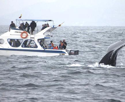 Las ballenas ya nadan en Manabí