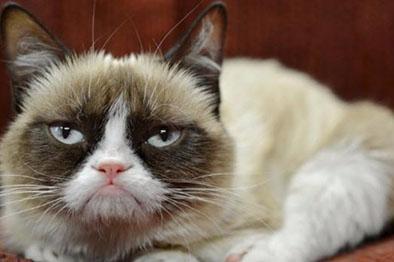 Un enojado gato con hambre incendia  su casa