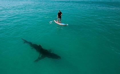 Crean aparato de uso personal para repeler tiburones