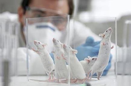 Desarrollan una vacuna experimental que genera anticuerpos del VIH en ratones