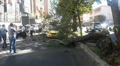Vientos fuertes dejan árboles caídos y ventanas rotas