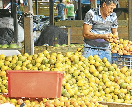 6 millones de mandarinas para  estudiantes de 14 cantones