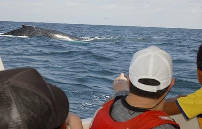 Las ballenas dieron su gran espectáculo