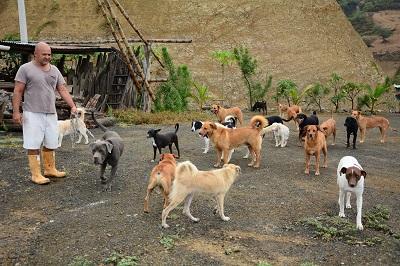 Hombre vive con 78 perros