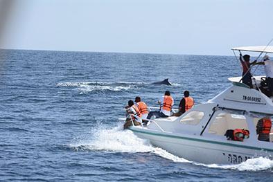 Vigilan las costas para evitar  perturbar a las ballenas