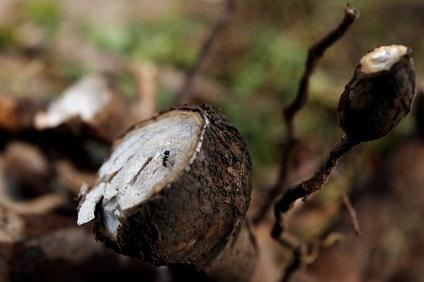 La principal cervecera de Jamaica ya utiliza la yuca como materia prima