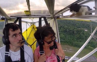 'Gato volador' sobrevive tras viajar de polizón en un ultraligero (VIDEO)