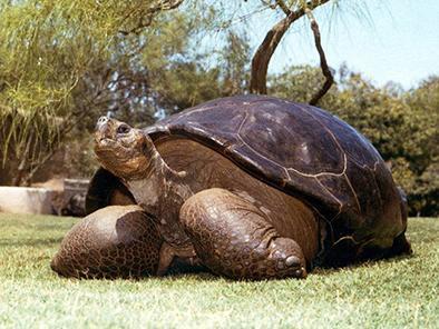 Muere tortuga de galápagos a los 150 años  en san diego
