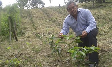 El gobierno traerá más café brasileño