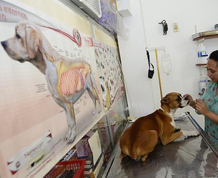 Perros y gatos con mejores atenciones