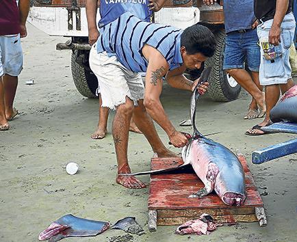 Aletas de tiburón, un negocio polémico