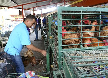 No se venderá aves en pie en el mercado