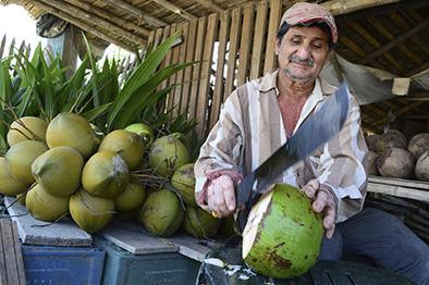 El coco siempre genera dinero