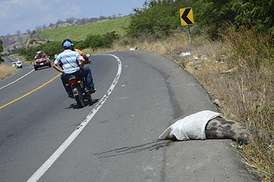 La basura y los animales muertos invaden orillas de las vías principales