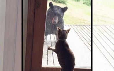 Una gatita ahuyenta a un oso y salva a su familia