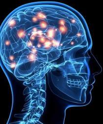 Hay nuevos conocimientos sobre cómo el cerebro forma recuerdos