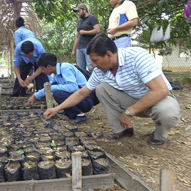 13 mil plantas hay en el vivero que sirve para reforestar for Plantas que hay en un vivero