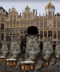 Bruselas usa a los gatos de Twitter para promocionar el turismo