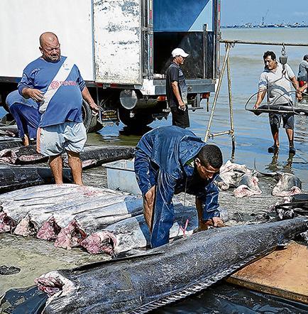 Bajas las capturas de atún y dorado