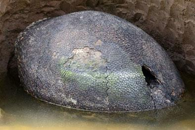 "Caparazón   gigante podría ser ""huevo de dinosaurio"""