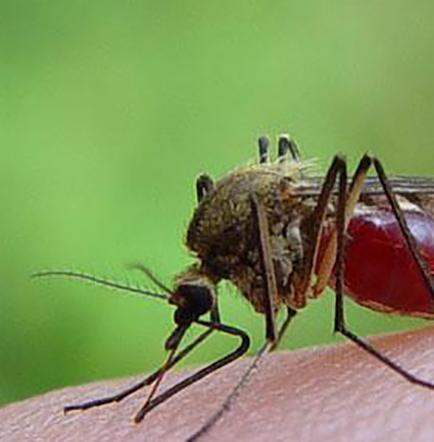 Confirman dos casos de zika