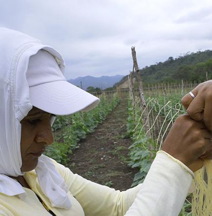 """""""Sembradores"""" no dan señales a agricultores"""