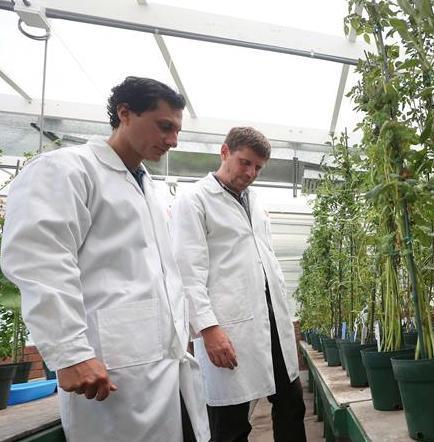 Científicos lideran un proyecto para cultivar papa peruana en Marte