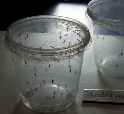 Más de la mitad de internas en cárcel colombiana presentan síntomas de zika