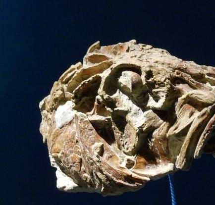 Hallan el fósil de un pez de cerca de 130 millones de años