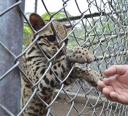 Piden apoyo para centro animal