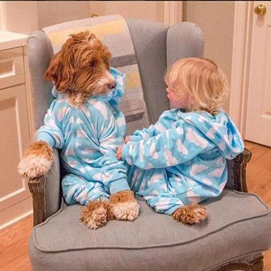 Visten a su perro como a su nieto  Y causan furor en las redes