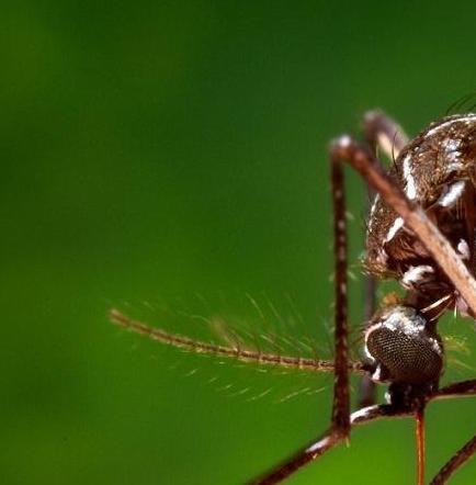 Primer caso sospechoso de virus Zika en Santo Domingo