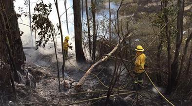 Incendios forestales en al menos 3 provincias