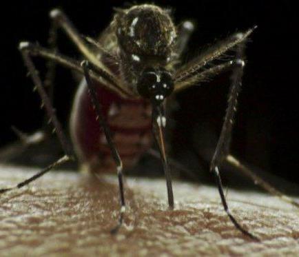 Sube a 22 la cifra de afectados por zika en Ecuador, con 67 casos sospechosos