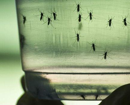 La OMS decide hoy si el brote de zika es una emergencia sanitaria internacional