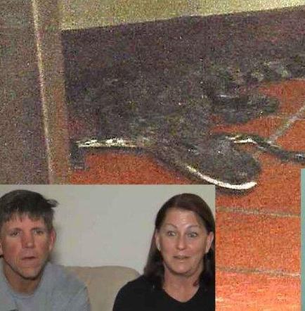 Acusan a joven que arrojó un caimán por la ventanilla de restaurante
