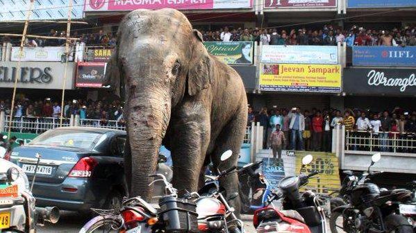 Un elefante destruye un centenar de viviendas y siembra el pánico en la India