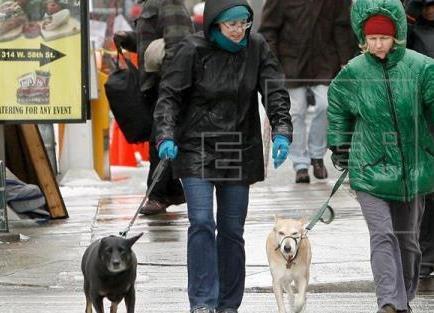 Aprueban ley que salva de morir a perros que causan ciertas heridas