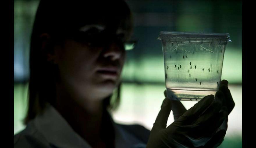 Investigadores prueban por primera vez la relación entre zika y microcefalia