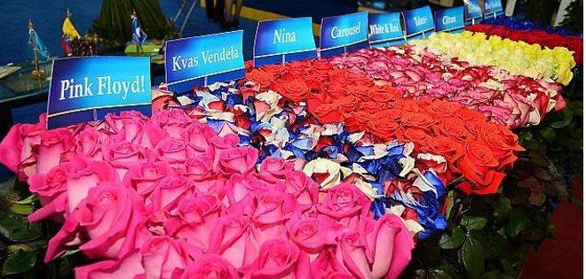 Rosas rojas de Ecuador esperan a los enamorados en mercados de medio mundo