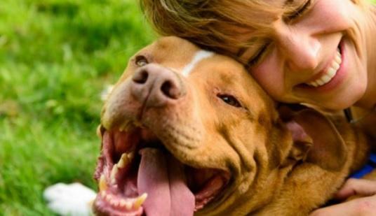 Los perros reconocen las emociones humanas
