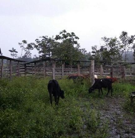 Encuentran cabezas de ganado en Santo Domingo