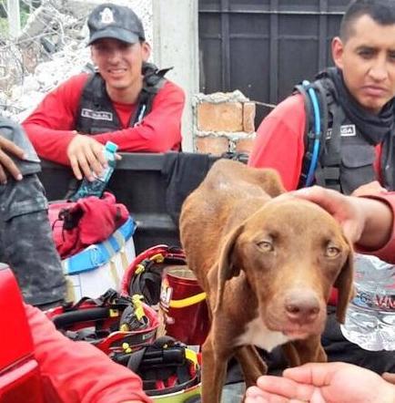 Mascotas son rescatadas entre escombros tras terremoto