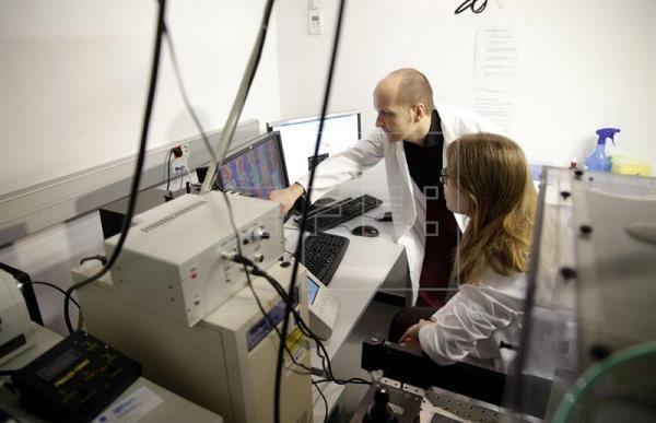 Científicos generan un músculo cardíaco a partir de prepucio humano