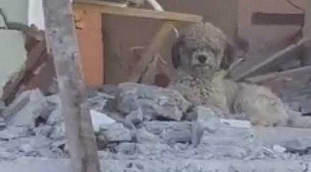 Max, el perro que perdió a su familia en el terremoto, tiene nuevos dueños