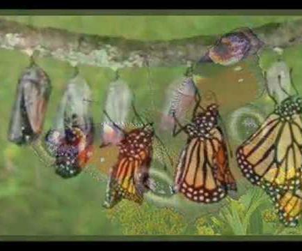 Descubren el mecanismo que controla la metamorfosis de los insectos
