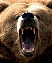 Fallecen 2 hombres atacados por osos en el norte de Japón