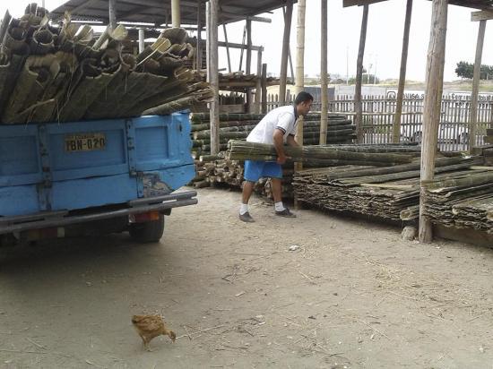 El valor de la caña  guadua y madera sube en los últimos días