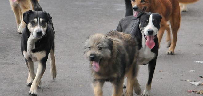 Matanza masiva y quema de perros errantes en el sur de Marruecos