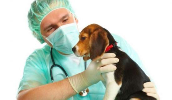 Cómo cuidar a su perro tras la castración